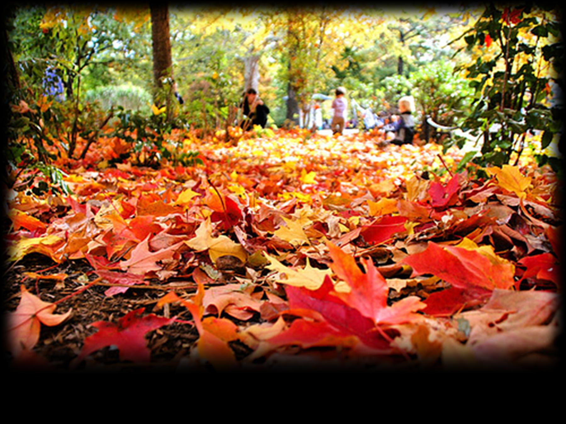 Fallen Leaves Ground